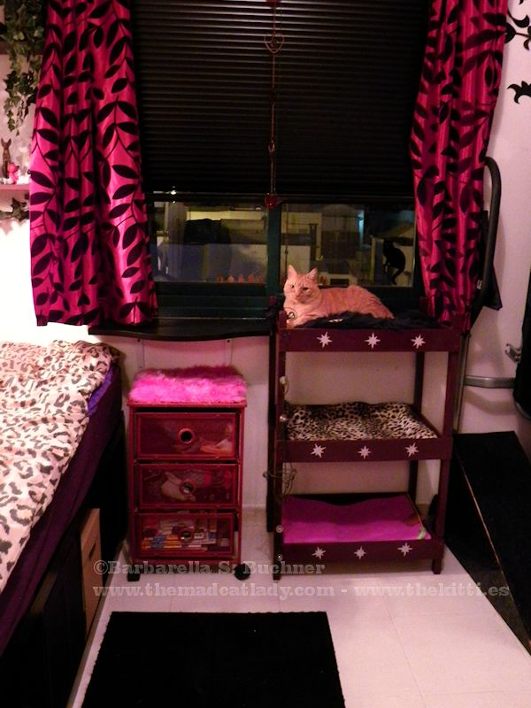 kitty bunk bed the mad cat lady