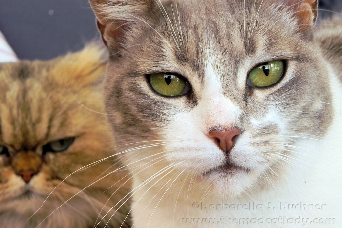 Four Stunning Cats Eyes The Mad Cat Lady