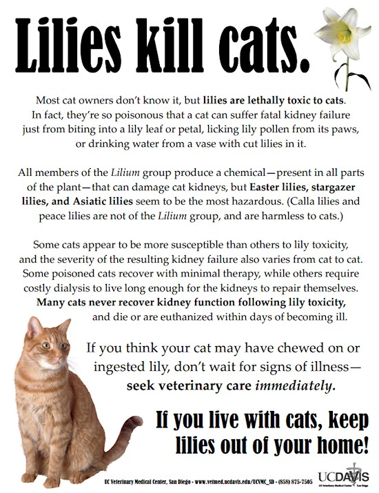 Which of the following are cats deathly allergic to